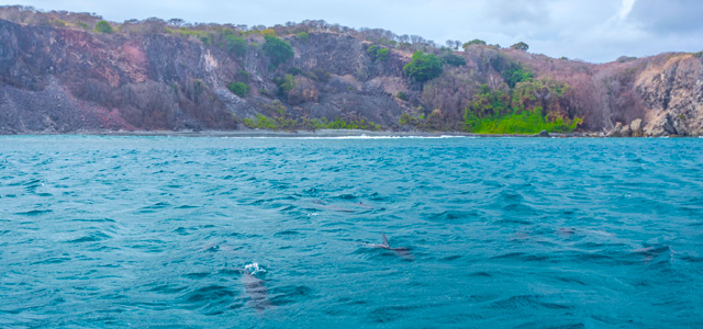 baia-dos-golfinhos-tibau-zarpo-magazine