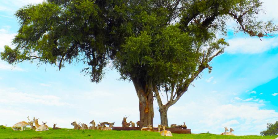 Os 5 melhores momentos do Pampas Safári