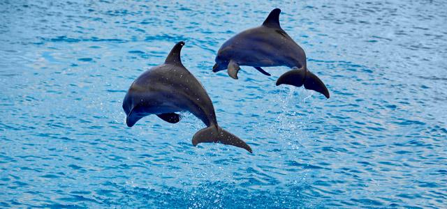 golfinhos-curacao-zarpo-magazine