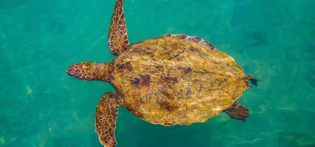 tartaruga-zarpo-magazine