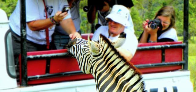 animais-Portobello-Resort-zarpo-magazine