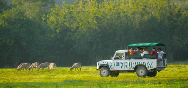 safari-Portobello-Resort-zarpo-magazine