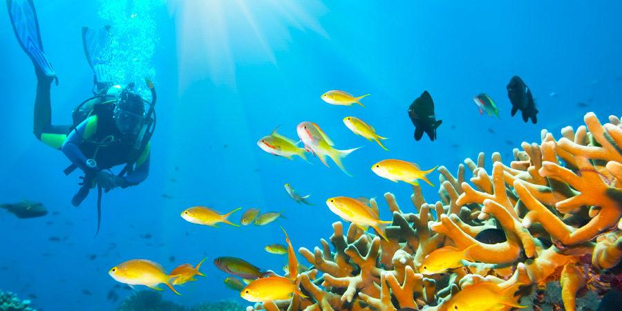 Bon Bini a Bonaire! A ilha caribenha dos seus sonhos!