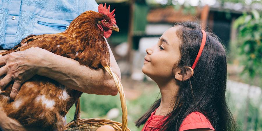 Hotel fazenda para crianças: a união da diversão com a natureza!
