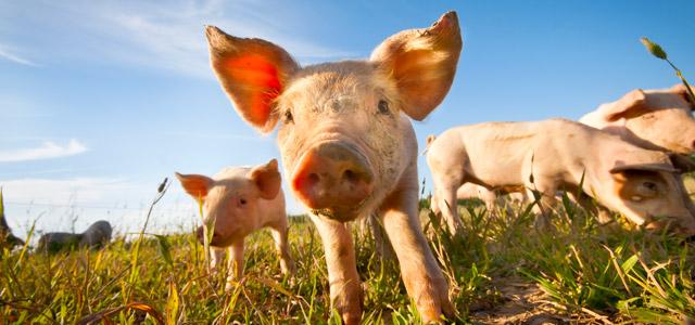 animais-fazenda-zarpo-magazine