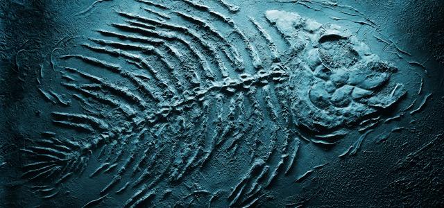 fossil-peixe-zarpo-magazine