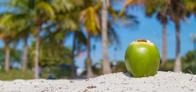 coco-areia-coqueiros-zarpo