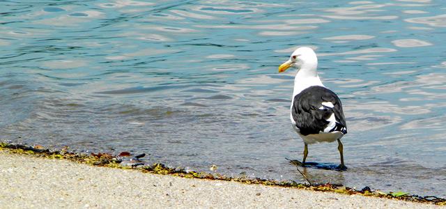 praia-saudade-floripa-zarpo