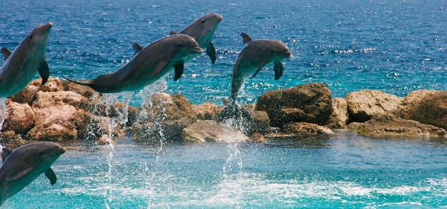 Dolphin Academy - Curaçao