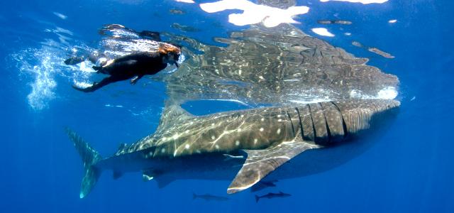Isla Mujeres - Monumento Tiburón Ballena Bahía