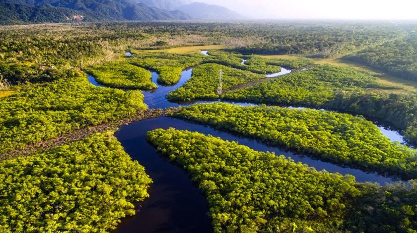 Vista aérea para a Floresta Amazônica