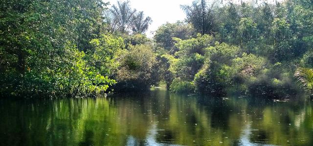 Floresta Nacional do Tapajós