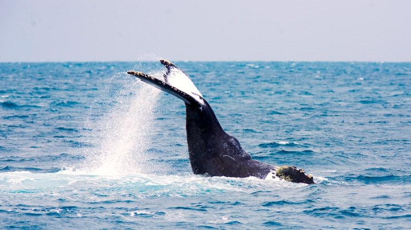 Baleias na Bahia