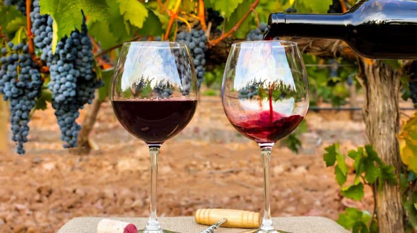 São Roque - Terra do Vinho