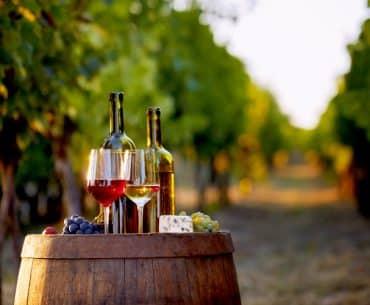5 destinos para uma viagem regada à vinho no Brasil e na América do Sul