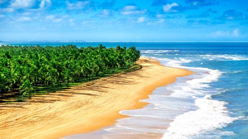 Praia com coqueiros em Barra de São Miguel