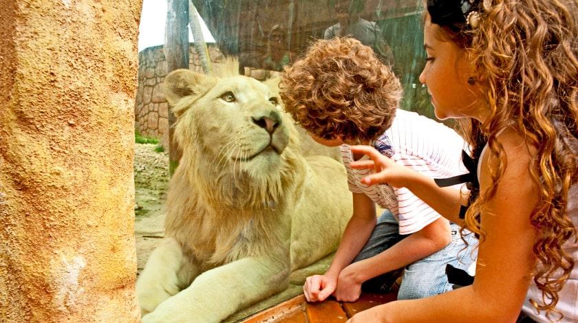 Zoológico do Beto Carrero World