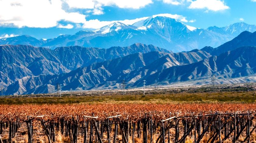 Campo de videiras com Cordilheira dos Andes ao fundo, em Mendoza