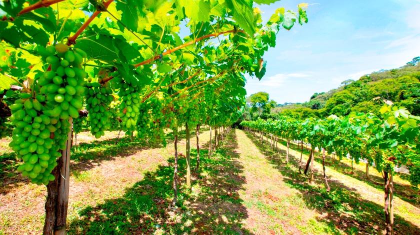 Vinícola na estrada do vinho, em São Roque
