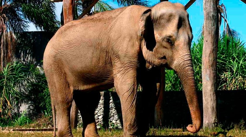 Zoológico no Beto Carrero World