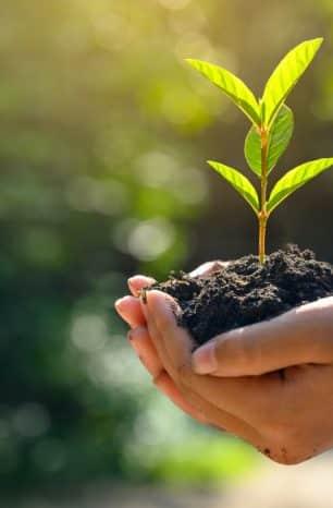Zarpo faz doação em prol do meio ambiente a cada reserva no site